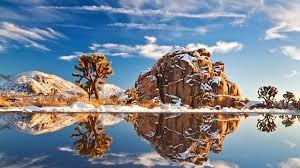 joshua tree winter