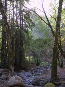 Napa Valley Camping: Best Bay Area Camping Spots