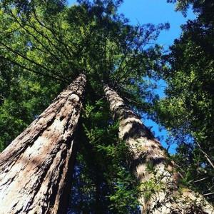 Best Bay Area Camping Spots in Portola Redwoods parks